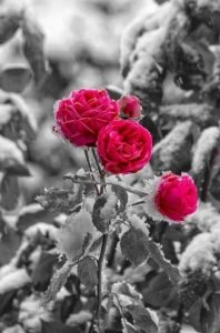 il perdono dona nuovo colore alla tua vita
