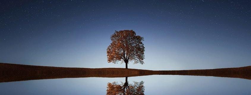guarigione albero genealogico